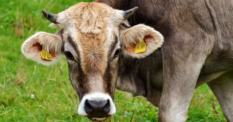 The problem with Cowspiracy